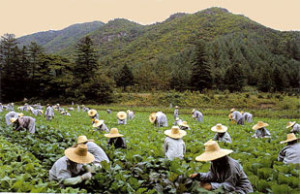 Монахи работают в поле