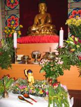 dr_buddha_2006_40